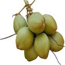 Naariyal/ Coconut- Green (1pc.)