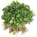 Methi (Bunch)